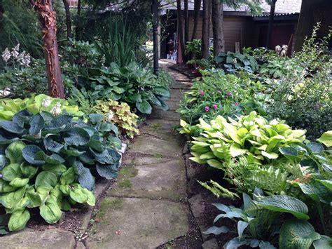 shade garden hostas for the garden pinterest