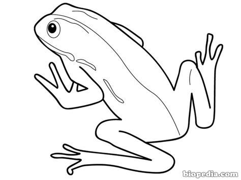 imagenes animales vertebrados para colorear colorea a los anfibios biopedia