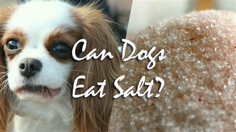 can dogs salt can dogs eat salt pet consider