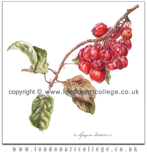 0007275528 botanical painting with coloured pencils botanical art in coloured pencil new course