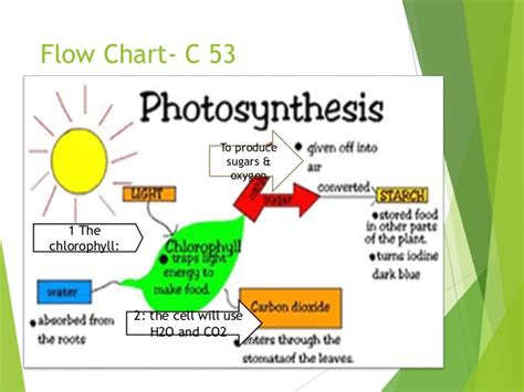flowchart photosynthesis flow diagram for photosynthesis choice image how to