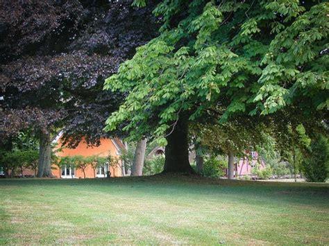 alberi giardino alberi da giardino