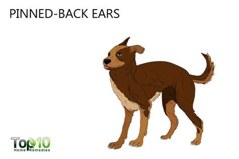dogs ears back top 10 signs your may be stressed top 10 home remedies