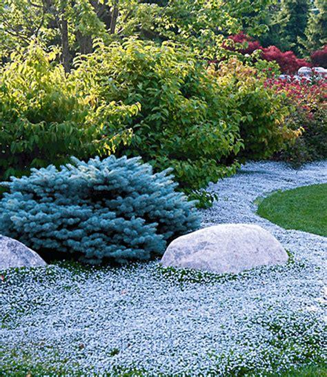 stauden die den ganzen sommer blühen bodendecker kollektion pink und bla bodendecker stauden