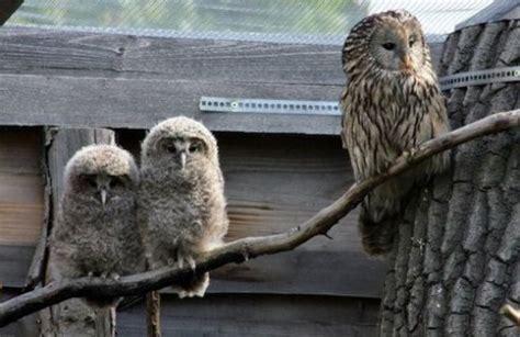 zoologischer garten wien zoologische workshop in den blumeng 228 rten hirschstetten