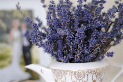 fiori lavanda secchi fiori di lavanda secchi fiori secchi