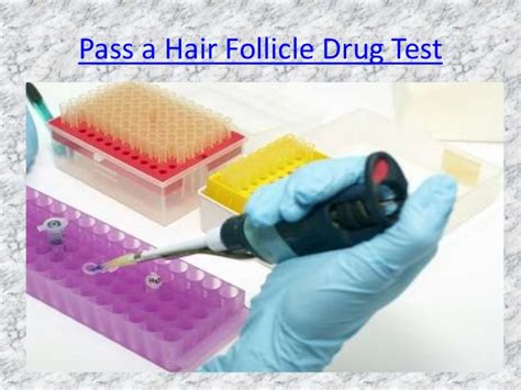 Detox Shoo For Same Day Hair Follicle Test by Hair Follicle Shoo For Tests Myideasbedroom