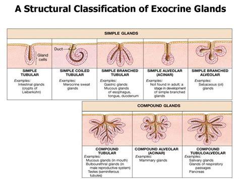 cytology embryology general histology