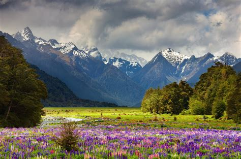 an ultimate luxury new zealand tour zicasso