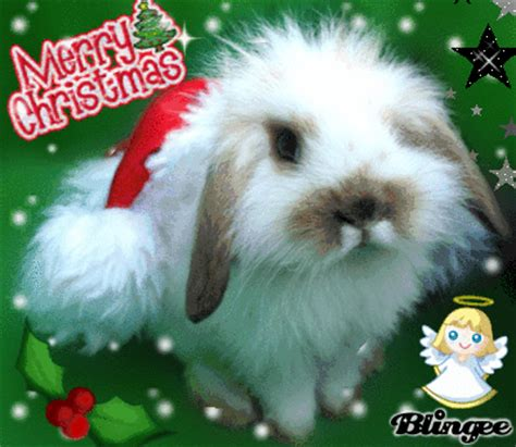 christmas bunny picture  blingeecom