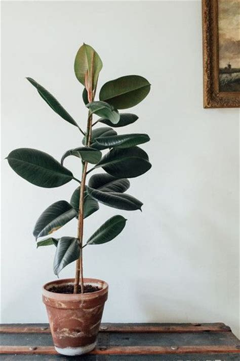 best indoor house plants 25 best ideas about house plants on plants