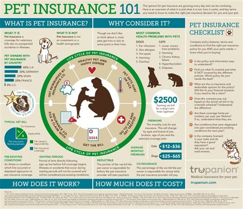 puppy insurance best 25 pet insurance cost ideas on vet costs puppy care and care