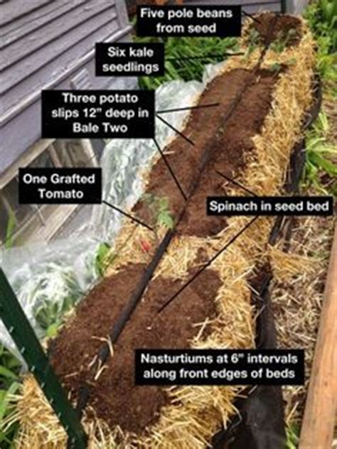 1000 Images About Straw Bale Gardening On Pinterest Straw Bale Garden Layout