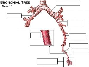 labeled tree diagram structure without quotes quotesgram