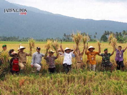Pengembangan Produksi Dan Sumber Daya Manusia By Ronald Nangoi musim paceklik produksi padi di semarang melimpah jateng pos