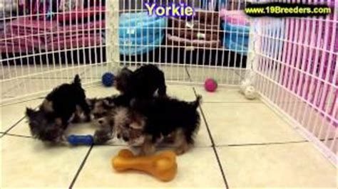 puppies for sale honolulu buy floating charm terrier breed fits glass lockets neonblond