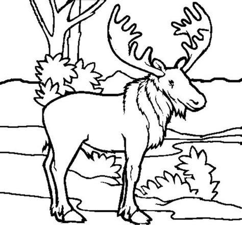 coloring book pages moose picture of moose coloring page play color moose