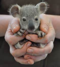 cute baby animal images amp pictures becuo