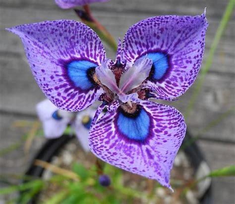 imagenes de flores espirituales m 225 s de 25 ideas incre 237 bles sobre flores en pinterest