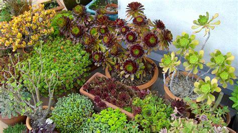 Sukkulenten Pflanzen by Sukkulenten Garten Natur Gestalten Erleben Geniessen
