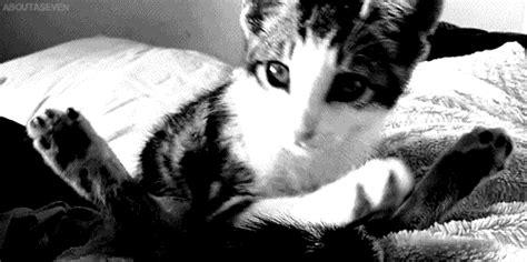 mengecilkan format gif kumpulan gambar kucing lucu bergerak terbaru cat flash