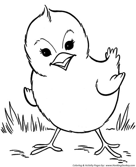 animated baby chicks coloring pages coloring pages