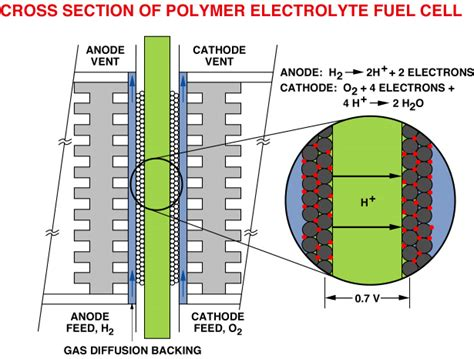 cross section cell membrane the polymer electrolyte fuel cell