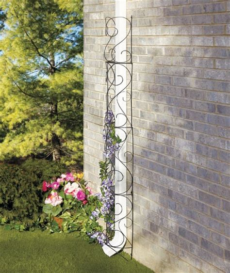 Downspout Trellis Pin By Denise Nault On Garden Pinterest