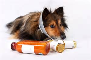 sedatives for dogs sedative could save thousands from suffering delirium daily mail