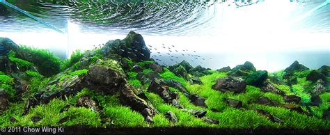 how to win an aquascaping contest aquascaping