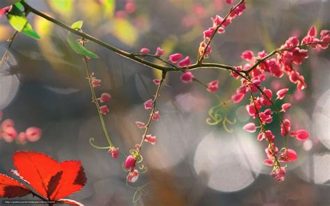 elenco fiori autunnali scaricare gli sfondi autunno fiori elenco bokeh sfondi