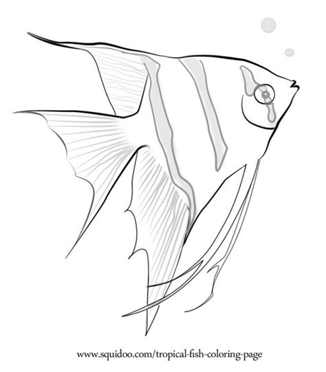 Tropical Fish Coloring Pages by Tropical Fish Coloring Page Crafty