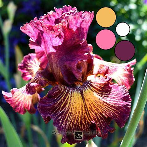 iris flower colors iris flower delica bead color palettes svetlana gallery