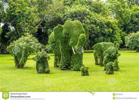 topiary elephants trimmed out of shrubs editorial photo