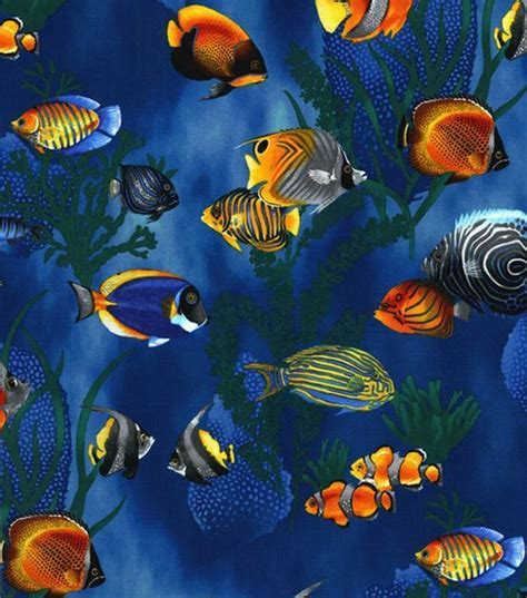 seawall luau grounds fish 1000 ideas about tropical fish on pinterest betta