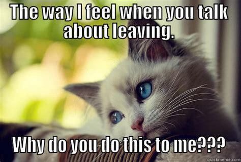 Awww Meme - sad kitty face quickmeme