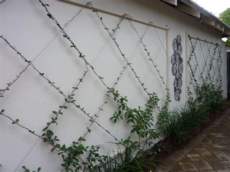 trellis designs wall trellis and vine outside rooms
