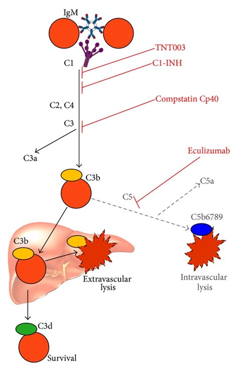 Pch Disease - future perspective on complement modulation in aiha inhibitors and