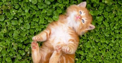 Theme Names For Kittens | unique cat names by theme pet care petpremium