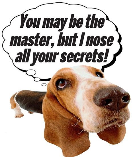 dogs sense of smell the powers of your pooch why your really is a genius daily mail