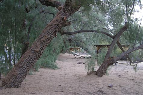 Tamarisk Grove Cabins by San Diego Birding Pages
