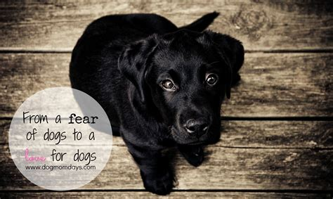 fear of dogs overcoming the fear of dogs days