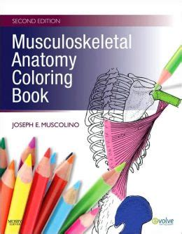 anatomy coloring book barnes and noble musculoskeletal anatomy coloring book edition 2 by
