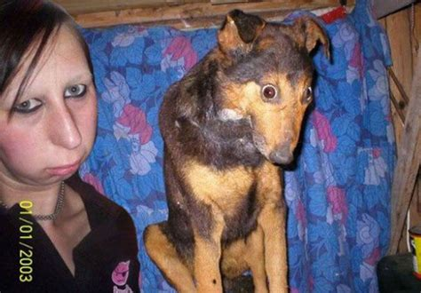 dogs look like owners these 21 dogs look exactly like their owners it s hilarious boredombash