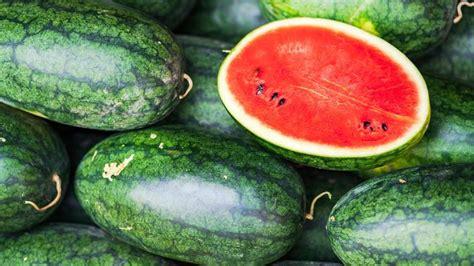menanam semangka  hasil panen memuaskan cocok