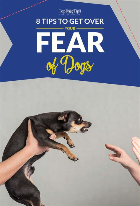 8 Tips On How To Choose A Vet For Your Pet by 8 Tips On How To Get A Fear Of Dogs As Per Animal