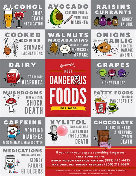 dangerous foods for dogs foods that are dangerous for your
