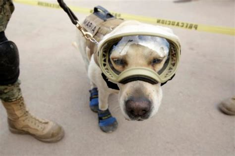frida the rescue frida the rescue emerges as of mexican earthquake the yucatan times
