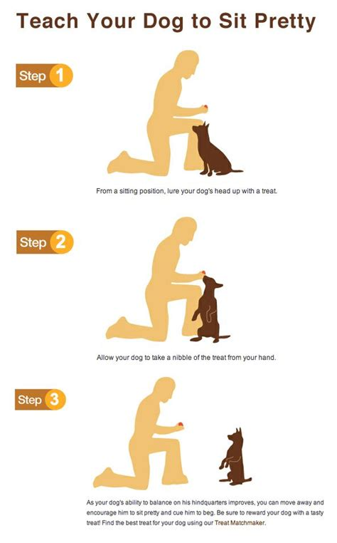 how to teach a to sit need to your check out this great site http dogtraining