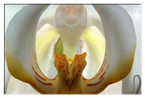 An Ode For Orchids treklens an orchid ode to o keefe photo